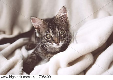 Funny Gray Tabby Cute Kitten With Beautiful Big Eyes On Soft, Fluffy Light Blanket. Lovely Fluffy Ca