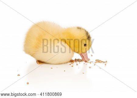 Little Beautiful Yellow Duckling Pecks Mixed Feed Isolated On White Background