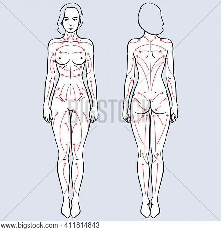 Lymphatic Drainage Dry Brushing Massages Lines Vector Illustration