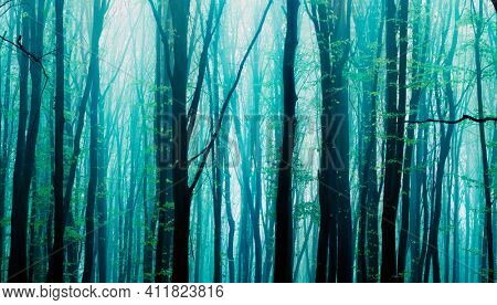 Foggy, sunny morning in summer forest. Fantasy forest.