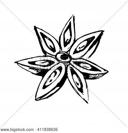A Sketch Of A Fragrant Star Anise, Badian. Vector Illustration.