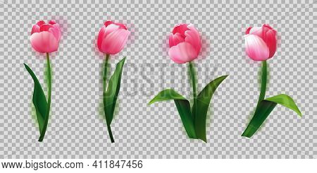 Realistic Vector Tulips Set. Beautiful Tulip Buds, Spring Flowers Design For Greeting Card 8 March O