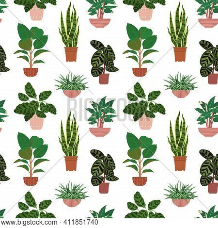 Seamless Pattern From Different Potted House Plants In Colorful Flower Pots. Snake Plant, Calathea A