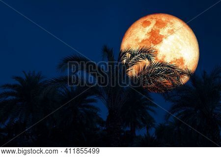 Full Harvest Blood Moon And Silhouette Coconut Tree In The Night Sky