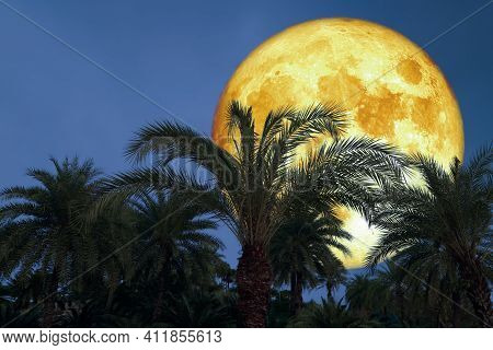 Super Corn Blood Moon And Silhouette Coconut Tree In The Night Sky
