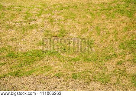 Green And Yellow Grass Texture Brown Patch Is Caused By The Destruction Of Fungus Rhizoctonia Solani