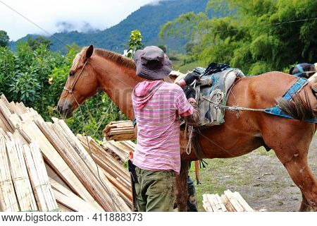 Lumberjack Organizing His Horse After Transporting Several Loads Of Lumber