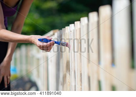 Woman Painting A New Wooden Fence In Backyard With Transparent Protective Varnish.