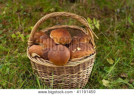 Crop Of Mushrooms.