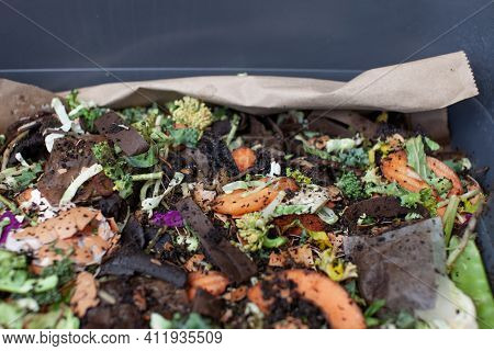 A Close Up View Of Worms Put Into A New Feeding Tray With Fresh Food And Bedding Material In An Indo