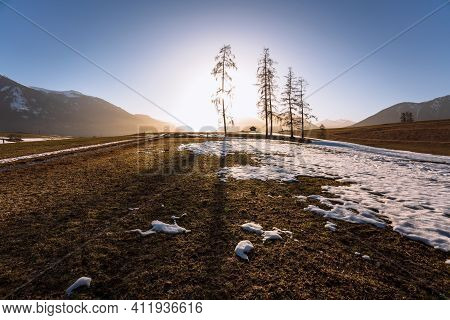 Alpine Mountain Landscape In Spring With Melting Snow And Large Evergreen Trees With Backlight, Miem