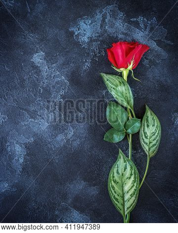 Beautiful Single Red Rose On Black Background With Place For A Text. A Card Of Condolence With Empty