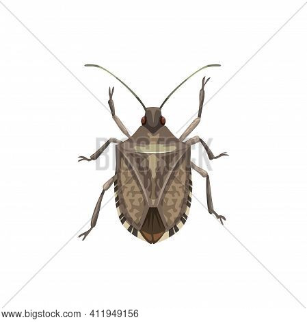 Shield Bug Icon, Pest Control Insects Extermination And Disinsection Service, Vector. Agriculture An