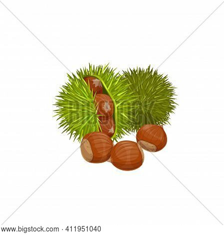 Chestnuts Isolated Healthy Snack. Vector Edible Raw Roasted Sweet Chestnut Castanea Sativa, Peeled G