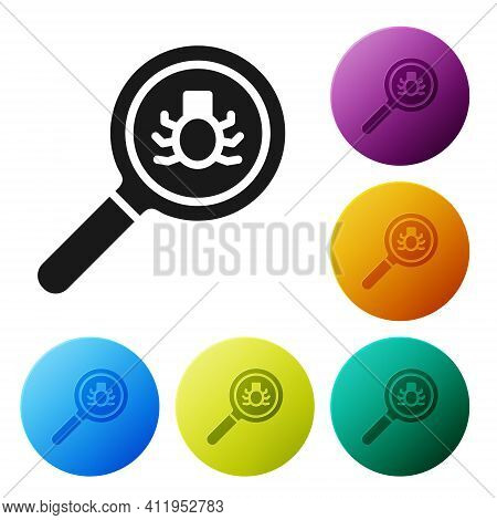 Black Flea Search Icon Isolated On White Background. Set Icons In Color Circle Buttons. Vector