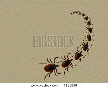 Dog Or Cat Tick Invasion - Aka Black Legged Deer Tick