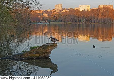 Early Morning Lights Of Dawn On The Lake Shore. Parc De La Tete D'or Is One Of The Larger City Park