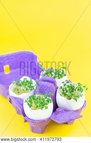 Garden Cress Growing In Eggshells, On A Yellow Background, Vertical, Copy Space
