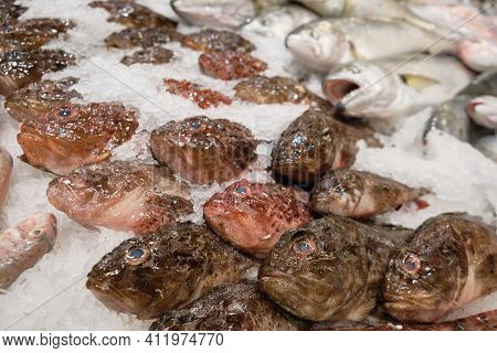 Chilled Fish On Ice At Hypermarket. Red Scorpionfish And Red Mullet Fish. Different Kinds Of Fresh C