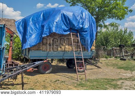 Trailer Loaded With Straw