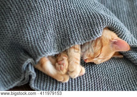 Cute red tabby kitten sleeps on a sofa under the blanket. Adorable little pet. Cute child domestic animal's portrait