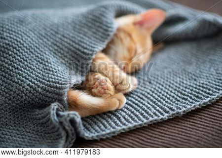 Cute red tabby kitten sleeps on a sofa under the blanket, focus is on paws. Adorable little pet. Cute child domestic animal's portrait
