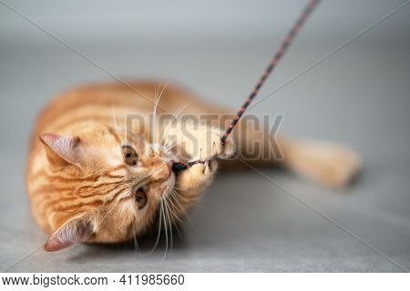 Cute funny red tabby kitten plays  at home. Adorable young pet.