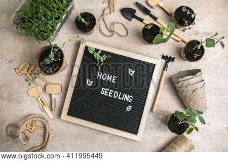 Letter Board With Text Home Seedling, Gardening. Planting Seeds In Biodegradable Paper Eco-friendly