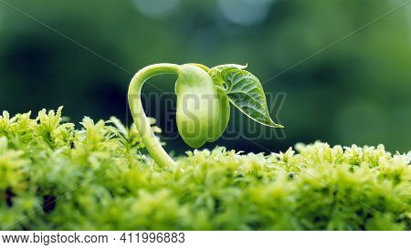 Close Up Of A Green Grass Beautiful Seedling Plant In The Green Grass Natural  Freshness Growing Gre