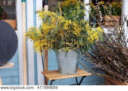 Bunch Mimosa Flowers In Vase On Table In Garden. Bouquet Of Yellow Wildflowers In Bucket On Veranda