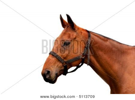 Cobbed Horse