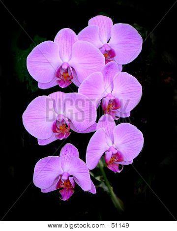 Orchids 078