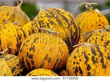 Organic Casaba Melon