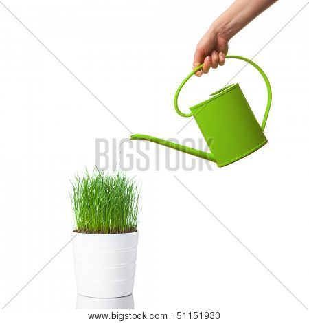 watering green grass with a watering can, isolated on white