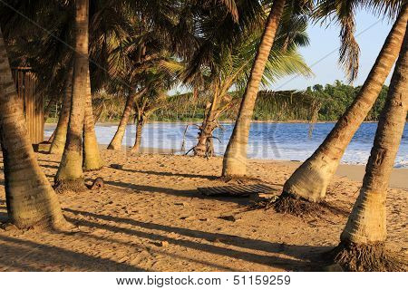 Cluster Of Palm Trees On An African Beach At Sunset