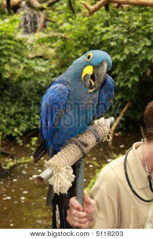Perching Parrot
