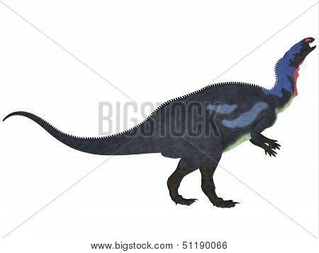 Camptosaurus On White