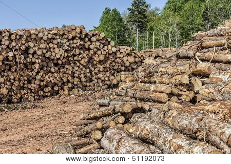 Stacks of logs in a lumber camp.