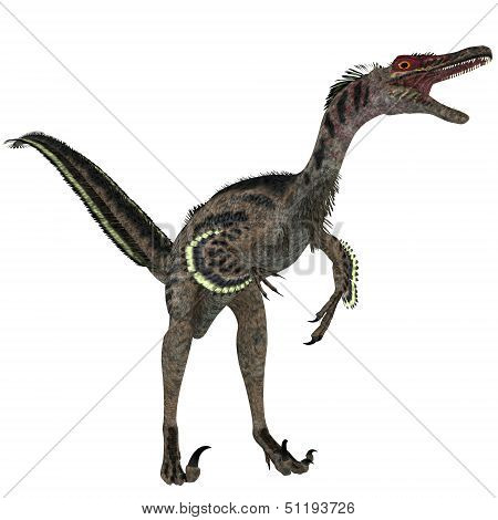 Velociraptor On White