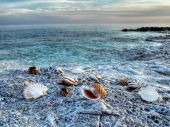 Sea shells on the rocky Adriatic coast poster