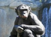 An Old ape Sits Alone on a Sunny Day poster
