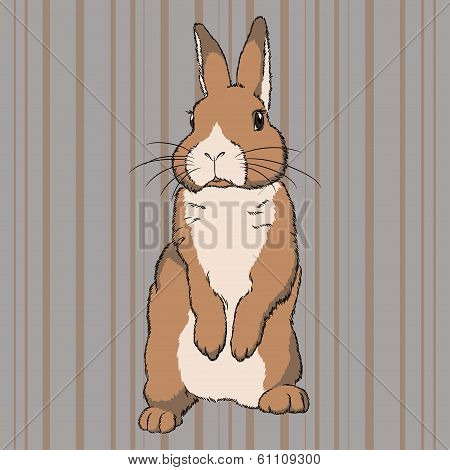 poster of Vector illustration of fluffy brown  standing rabbit on striped background