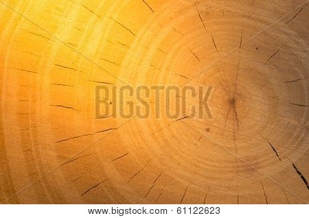 Tree stump background in the nature eco concept poster