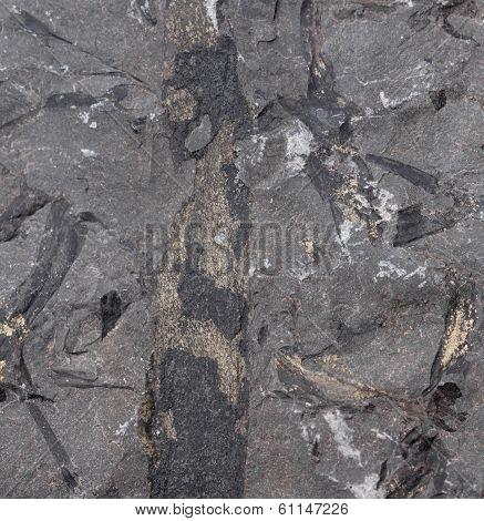 Borehole Stone