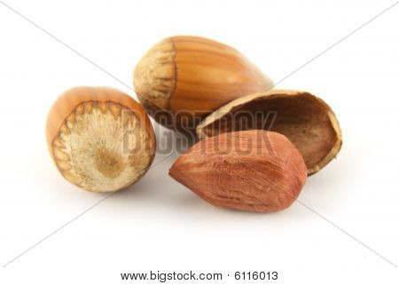 Hazelnut and it shal isolated on white background poster