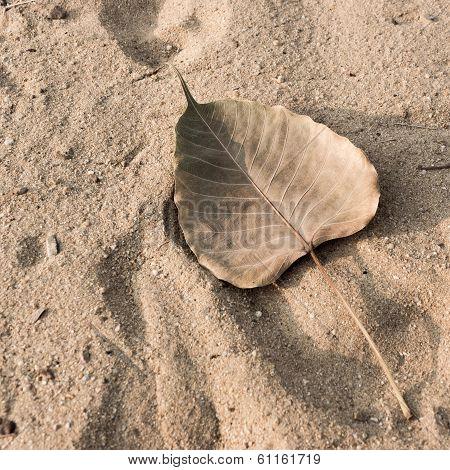 Heart-shaped Leaf