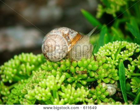 a snail out of its shell poster