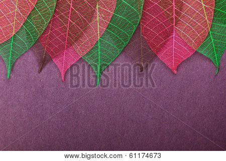 Ornate leaves