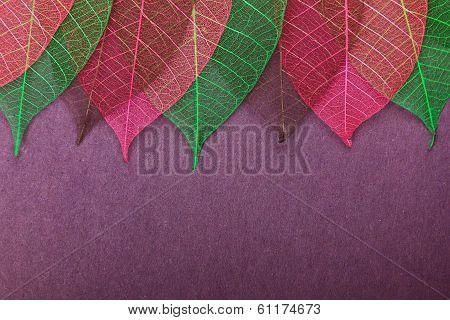 Ornate leaves