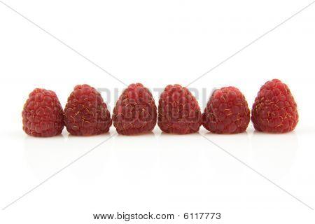 Six Fresh Raspberries